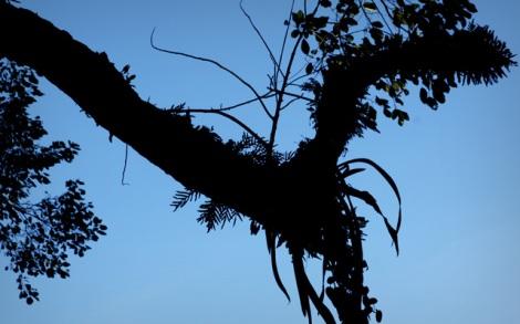 Croton, a Iguazú