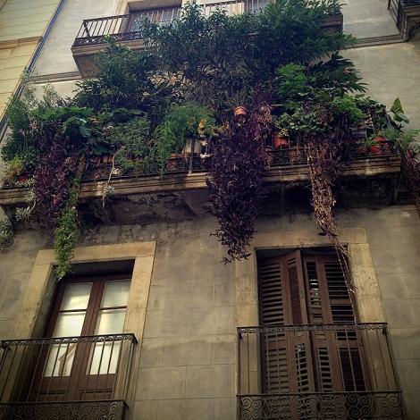 Balcó vegetal al Raval de Barcelona.